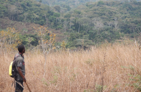 The natural comeback of tropical rainforests in the savanna region